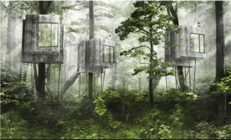 Iværksættere vil bygge hytter i træerne på Als Odde tæt ved Mariagerfjord.