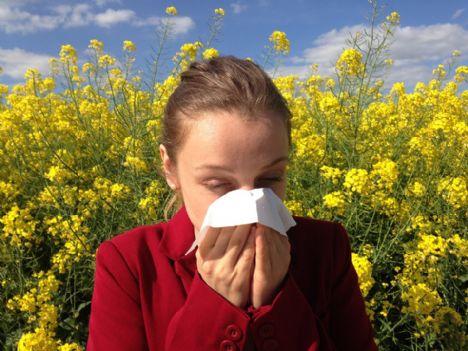 Dagens plage: Pollen