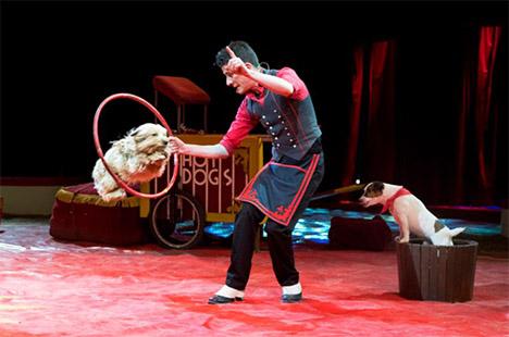 Så er cirkus Arena i byen!