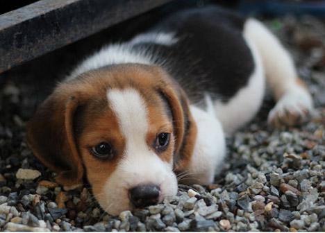 loppebid på hund