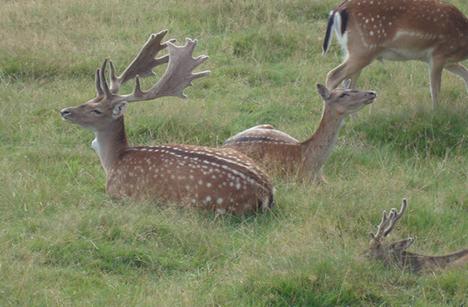 Hadsund Dyrepark atter udsat for nedskydning og tyveri af dyr