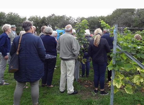 Vinsmagning og tapas på Mariagerfjords lokale vingård