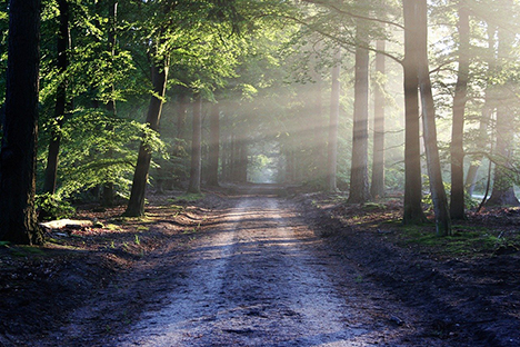 Regler for hvad du må tage med hjem fra skoven