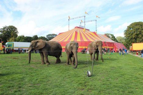 Elefanter i klemme i valgkamp
