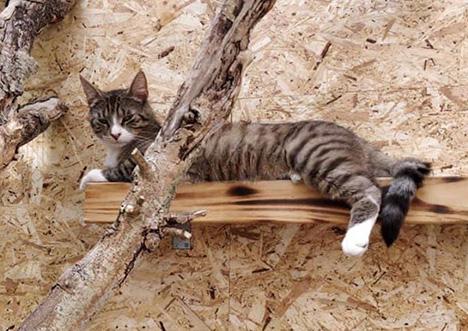 Ferietid og herreløse katte