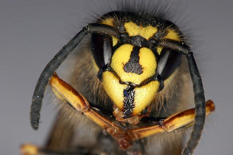 Sådan forbereder du dig på insektplagen i år - og i fremtiden