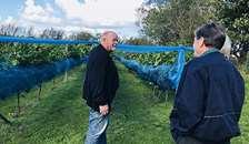 OddeKystVineri  holder åben vingård på Dansk Vindag 2019
