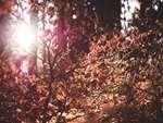 Er hus og have gjort klar til efteråret?