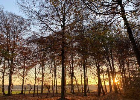 Havnø Skovbegravelsesplads er nu en realitet