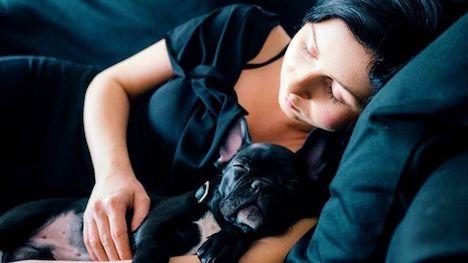 Små hunde hitter – men tænk dig om: Små hunde har også store behov
