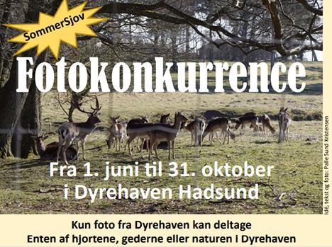 Sommerkonkurrence i Dyrehaven Hadsund
