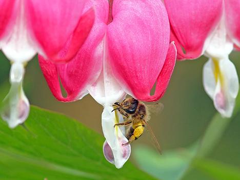 Bier kan blive årets havetrend: Sådan får du en insektvenlig have