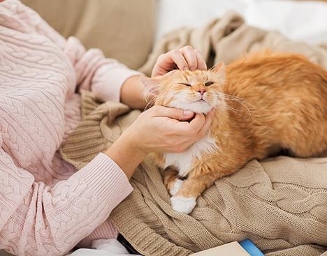 Undgå naboproblemer på grund af din kat