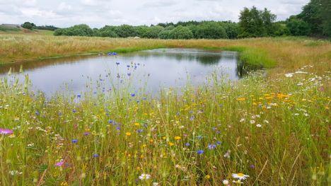 Regnvandsbassiner bliver bynære naturperler