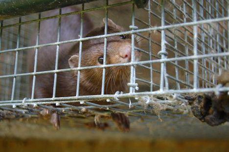 Dyreværnsorganisation: Kompensationsaftalen er en historisk fejltagelse